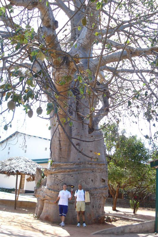 With one of the wonderful Umbuyu (Baobab) trees in the grounds of the Haven Of Peace Academy.